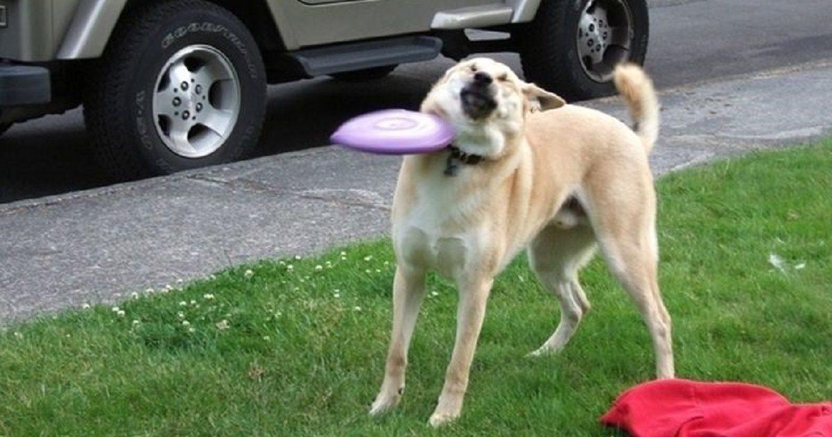 incredibly awkward dog photos to make you smile