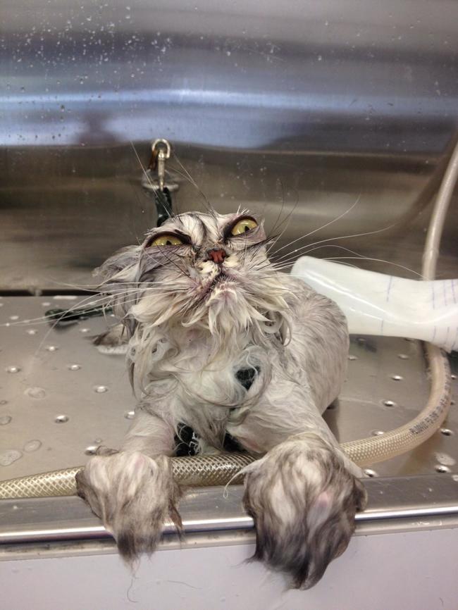 cat hate