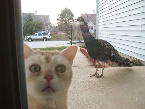 pets need inside