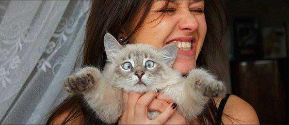 Cat vs dog diary