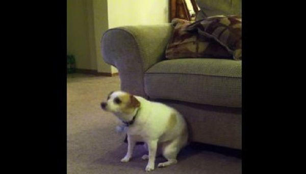 Whenever Their Dog Sits In Front Of The Couch He Has A