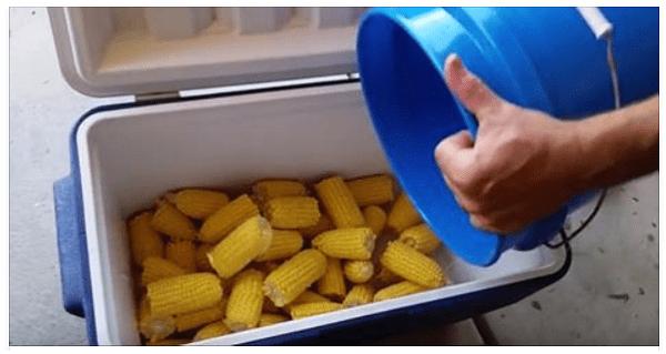 corn on the cob_1
