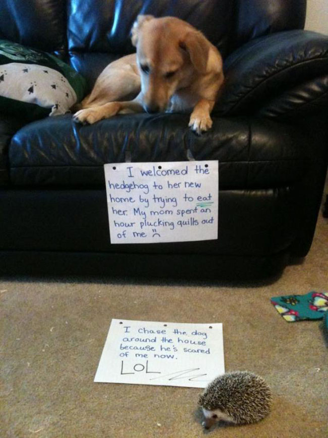 naughty-dogs-cats-confessing-crimes-1