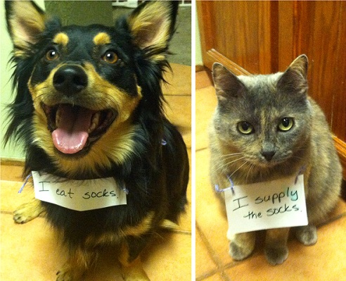 naughty-dogs-cats-confessing-crimes-14