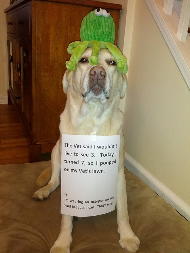 naughty-dogs-cats-confessing-crimes-15