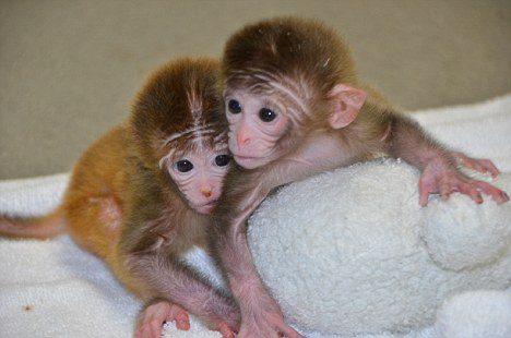 animals mutation 16