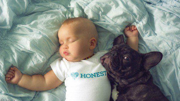 baby and french bulldog 5