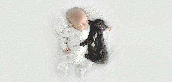 baby and french bulldog 9