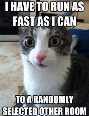 cat logic 11