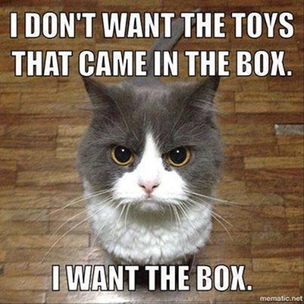 cat logic 12