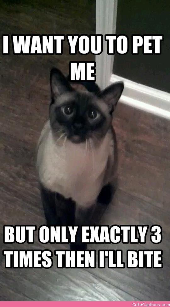 cat logic 13