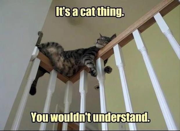 cat logic 14