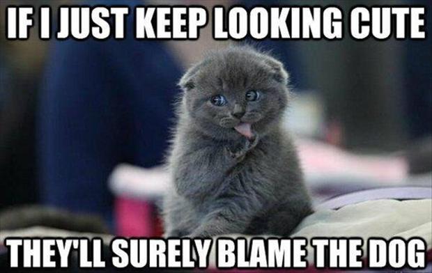 cat logic 17