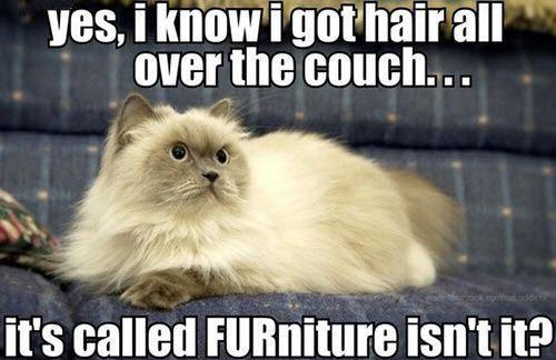 cat logic 9