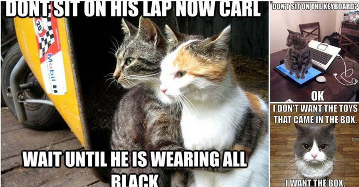 19 Bits Of Cat Logic Only People With Cats Will Understand