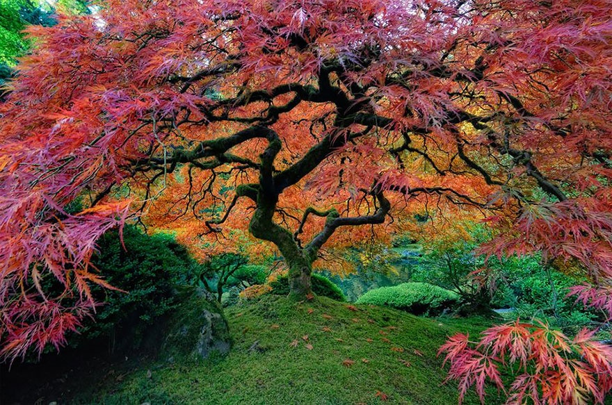 gorgeous trees 5