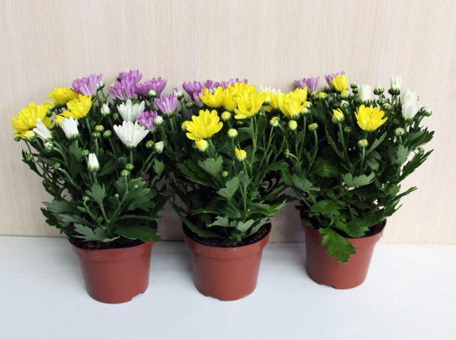 houseplants that cleans air 1
