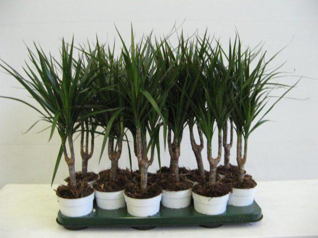 houseplants that cleans air 3