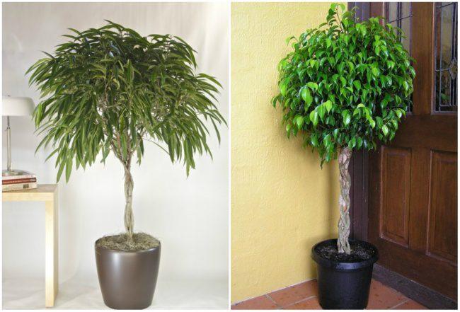 houseplants that cleans air 4