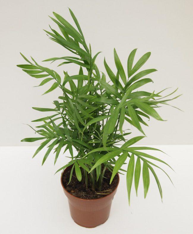 houseplants that cleans air 8