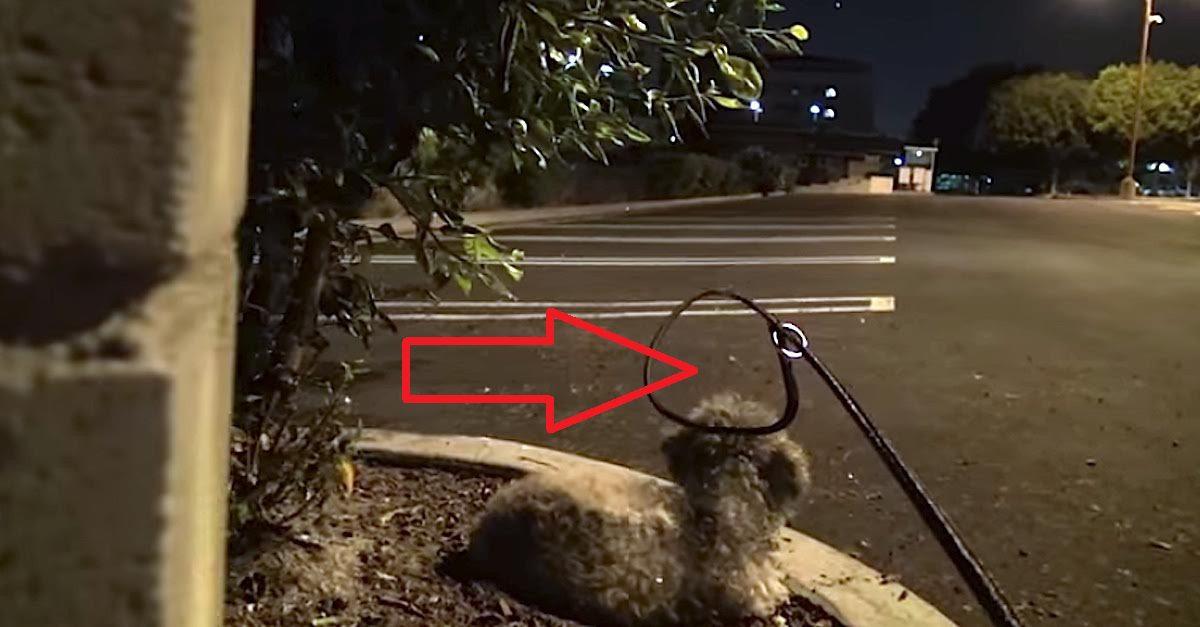 saving dog at late night