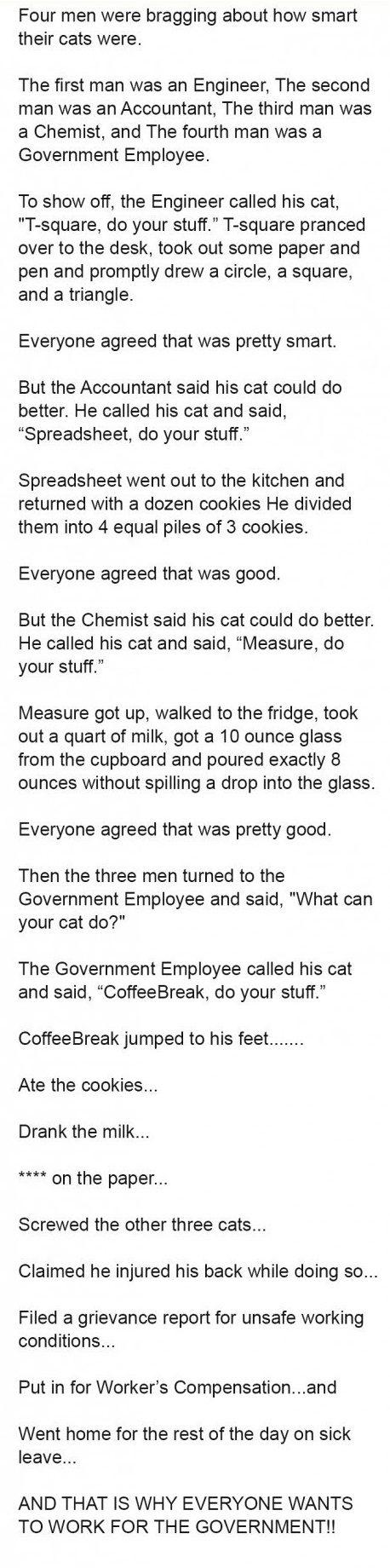 smartest cat