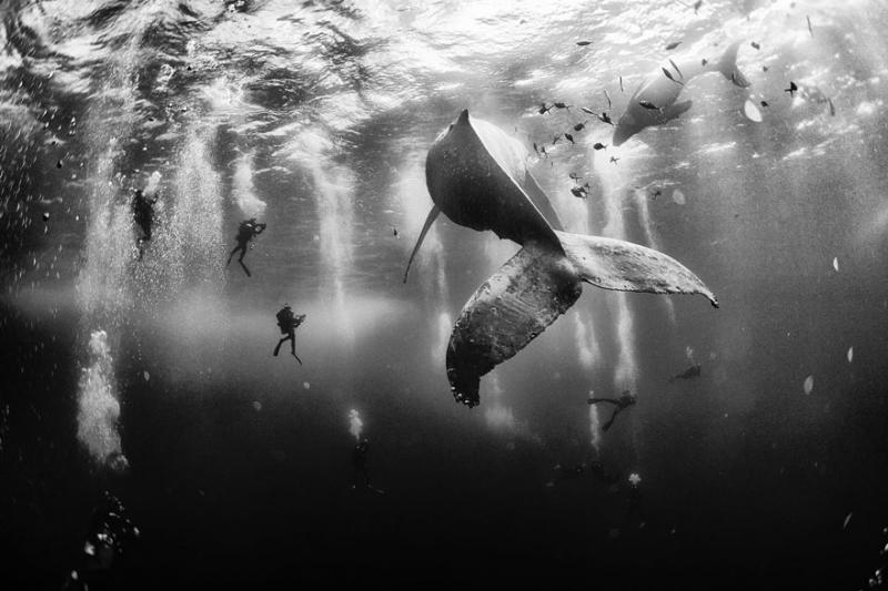 National Geographic Photo Contest 1