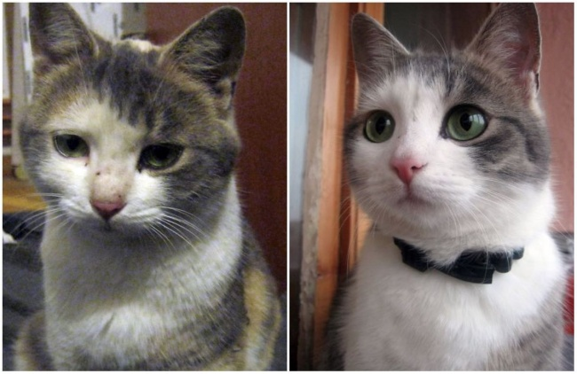 animals from shelter 9