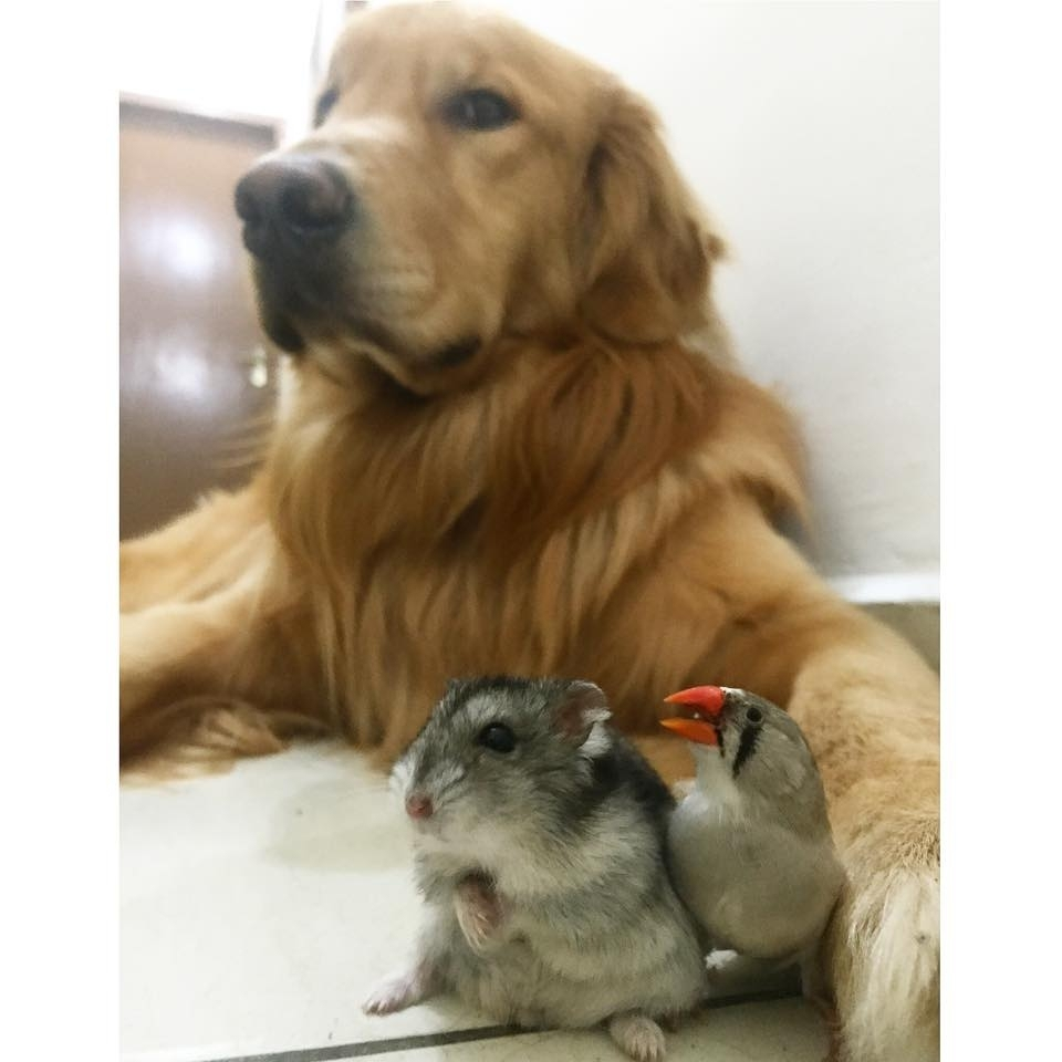 dog birds and hamster 2