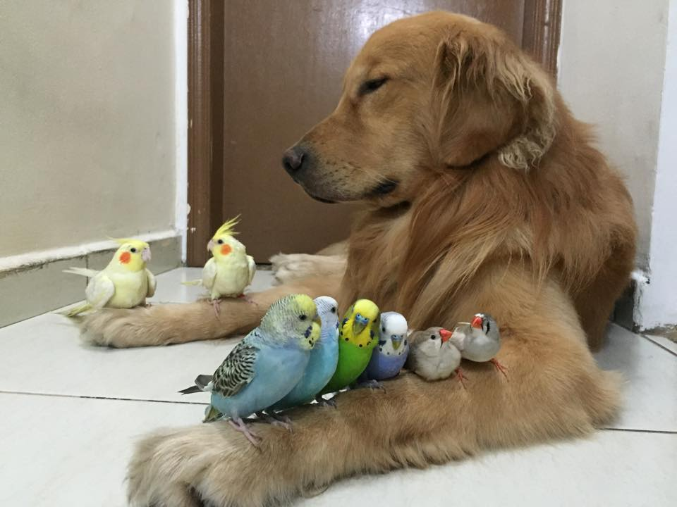 dog birds and hamster 3