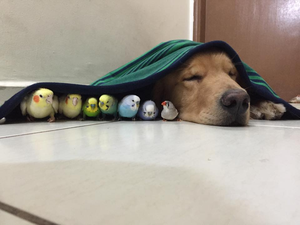 dog birds and hamster 6