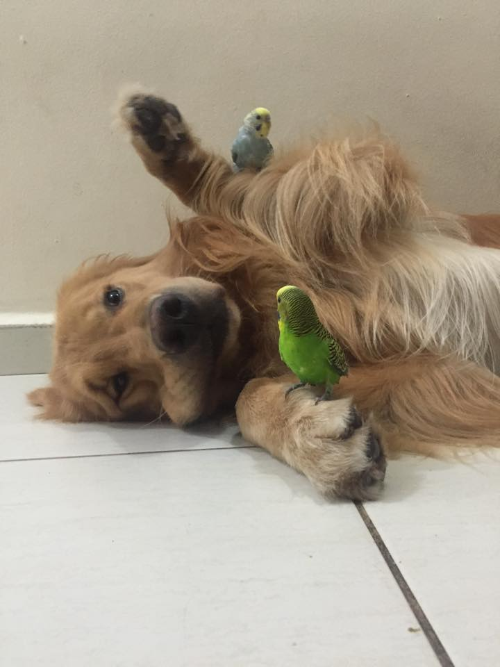 dog birds and hamster 8