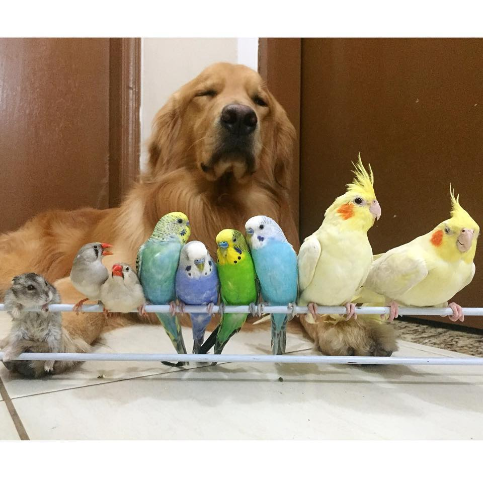 dog birds and hamster 9