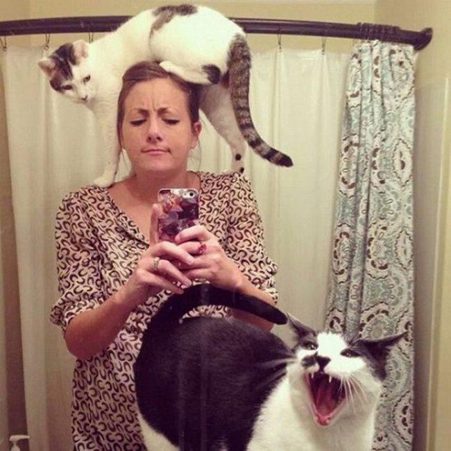 hilarious cats 10
