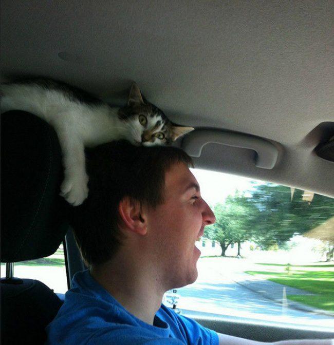 hilarious cats 13