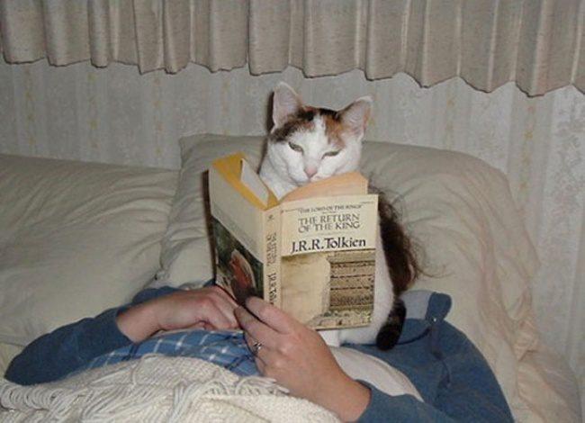 hilarious cats 7