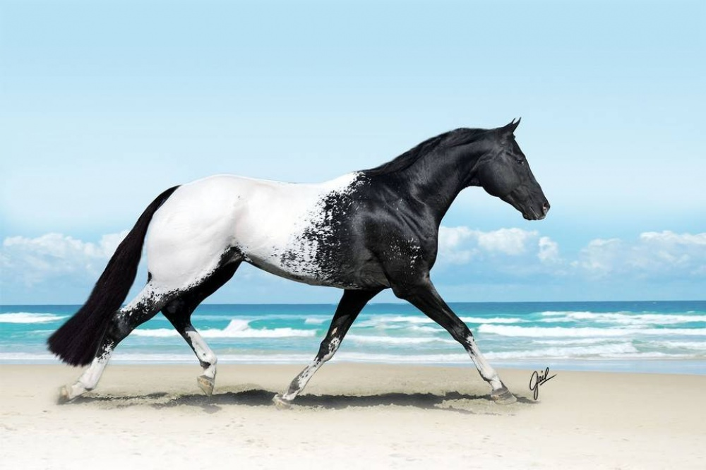 magnificent horses 15
