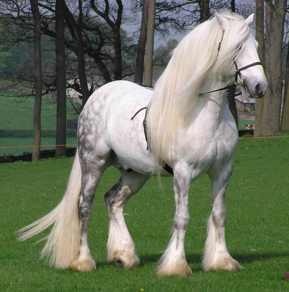 magnificent horses 3