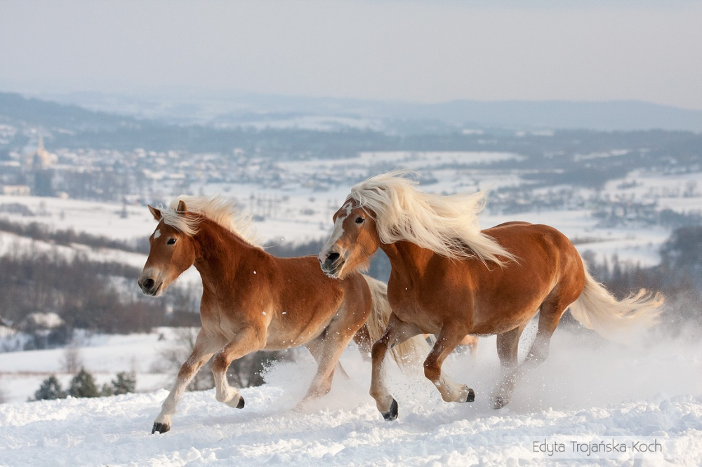magnificent horses 5