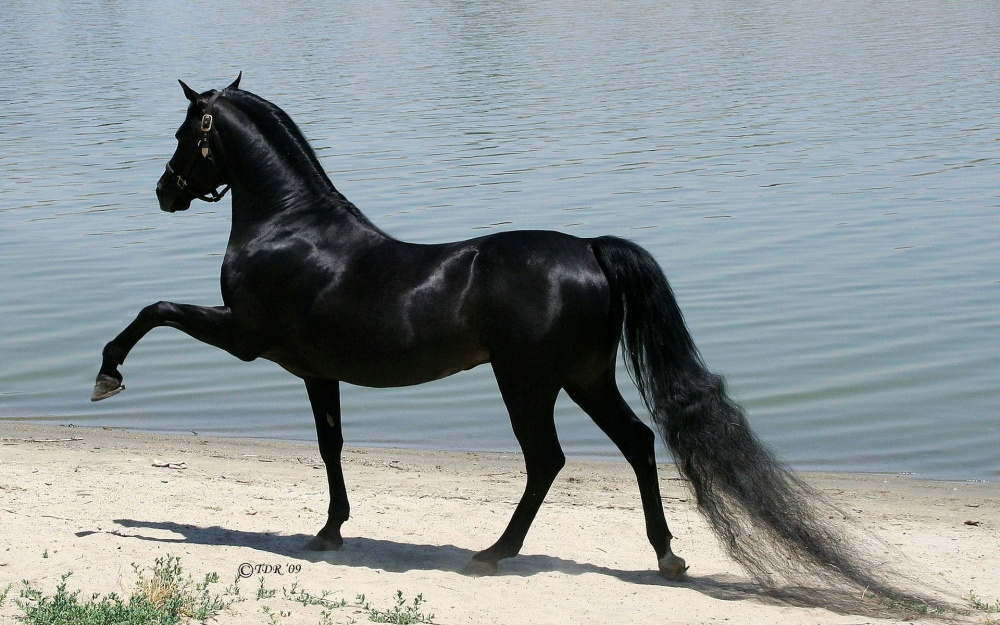 magnificent horses 8