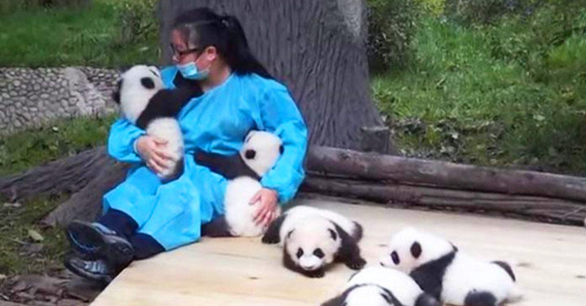 нас очень обнимите панду и получите деньги действия термобелья При