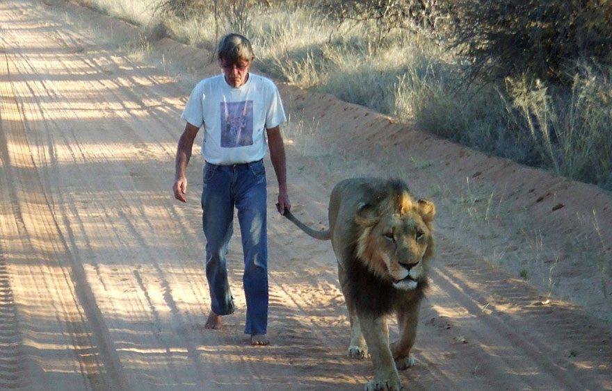 Abandoned Lion