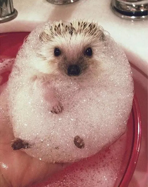 animals love bath time