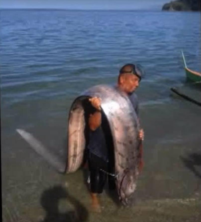 giant oarfish