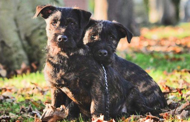 little dog and big rottweiler