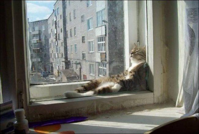animals just love sunbathing
