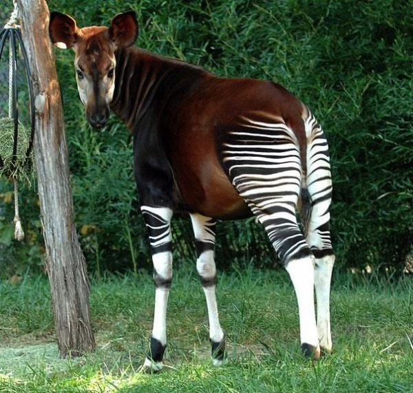 animals that does not exist