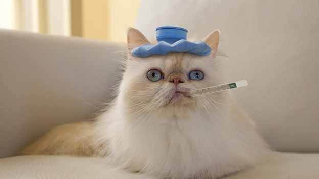 cat cancer signs 7