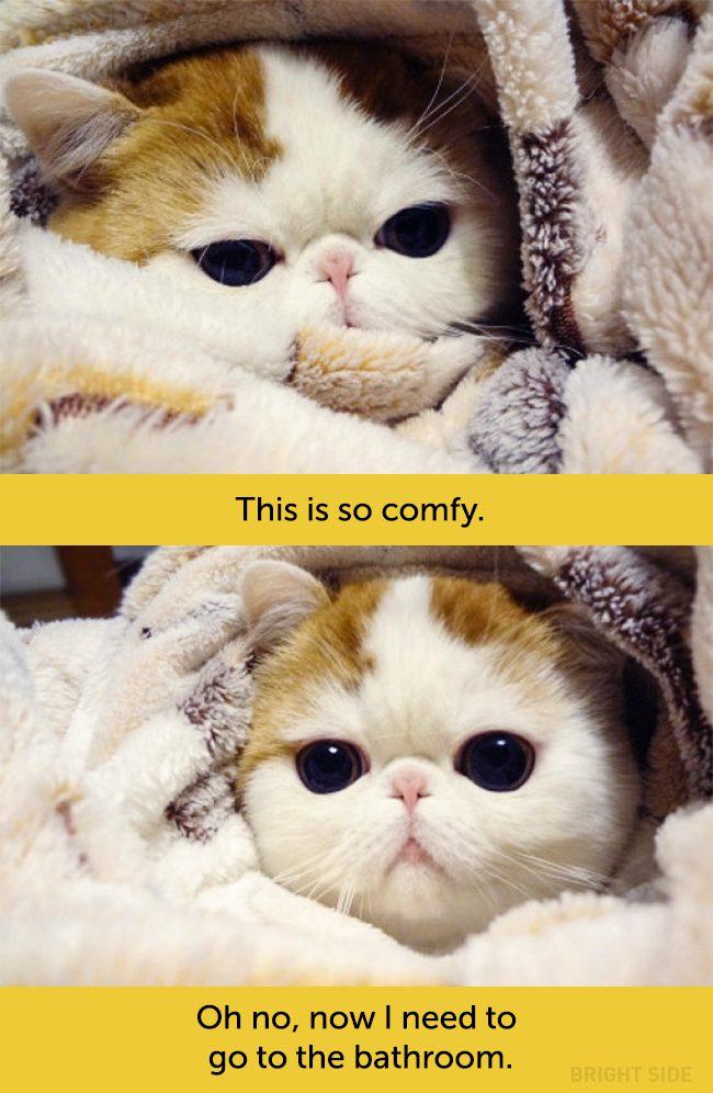 cats facial expressions