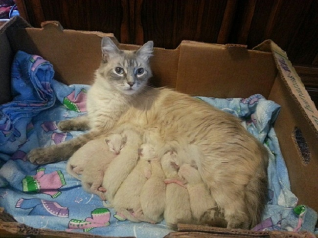 cats who know parenting